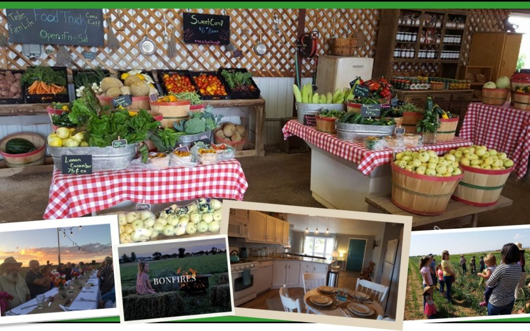 Schwebach Farm — where Agri-business meets Agri-tourism